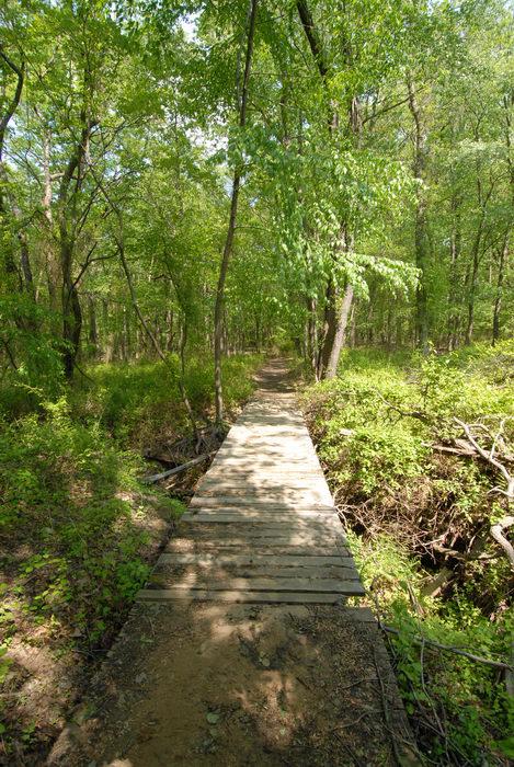 boardwalk, bridge, trees, woods