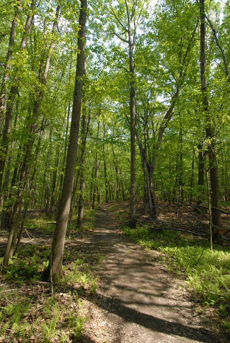 path, trail, trees, woods