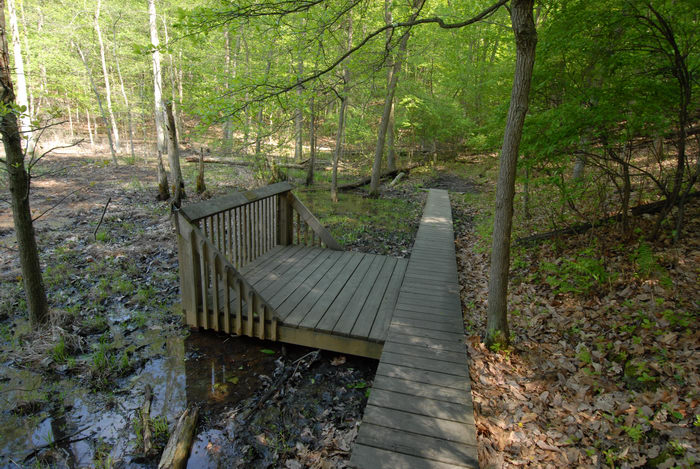 Carabs Photo: boardwalk, trees, water, woods   Taken In