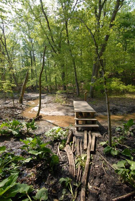 boardwalk, bridge, stairs, trees, water, woods