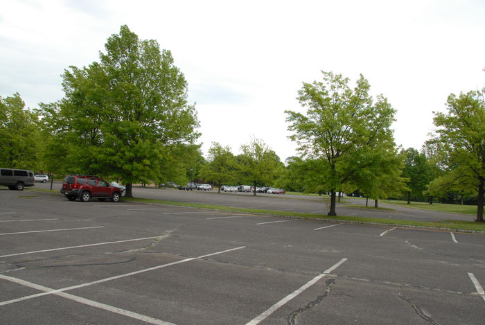 cars, parking lot, trees, woods