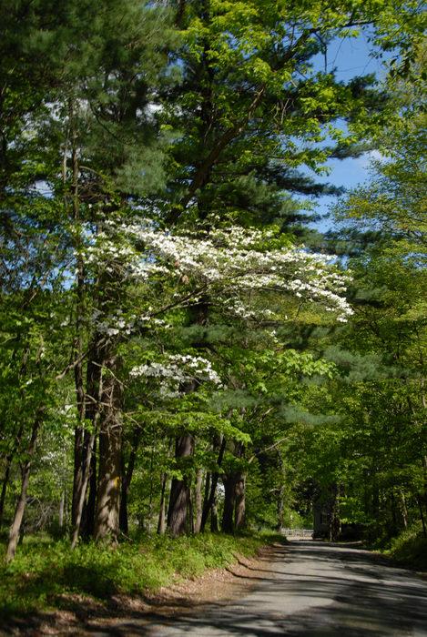 flowers, road, trees, woods