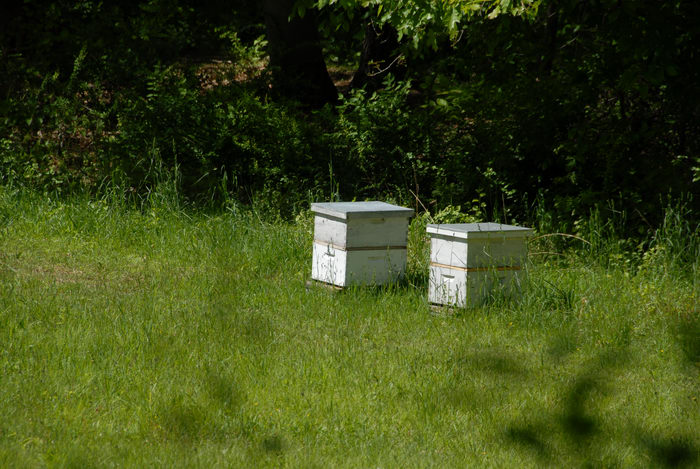 bee hives, grass