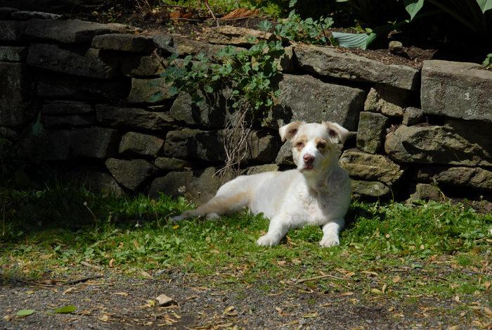 grass, puppy