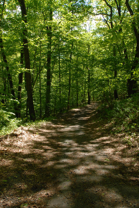 path, paved, trail, trees, woods