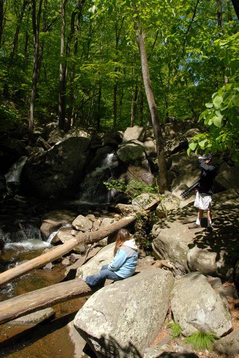 Jackie, Trout Brook, brook, moving water, rocks, stream, trees, water, waterfall, woods