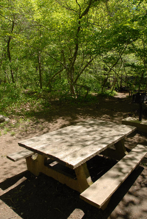 picnic table, trees, woods