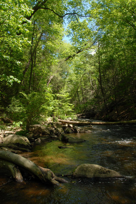 black river, moving water, river, rocks, trees, water, woods