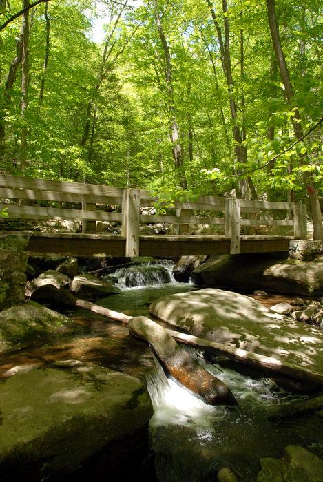 Rinehart Brook, brook, moving water, rocks, stream, trees, water, waterfall, woods