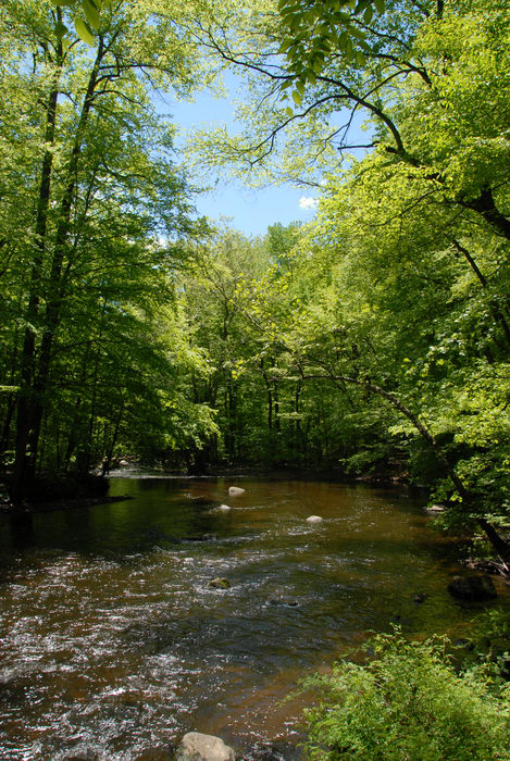 black river, ground cover, moving water, river, trees, water, woods