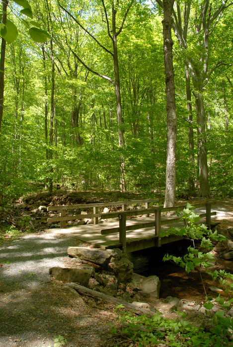 Rinehart Brook, bridge, ground cover, path, rocks, trail, trees, woods