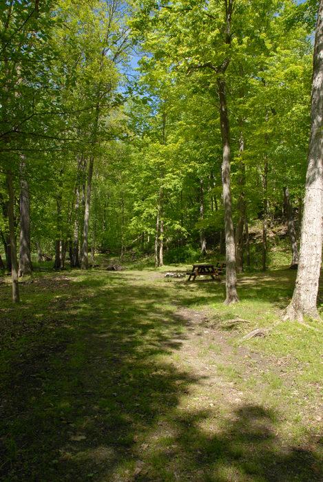 Spots W6A-C, campsite, grass, trees, woods