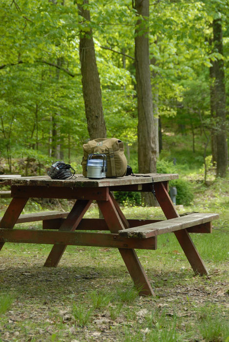 grass, light, picnic table, trees, woods