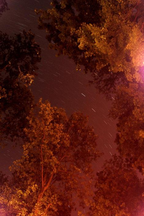 long exposure, skars, trees
