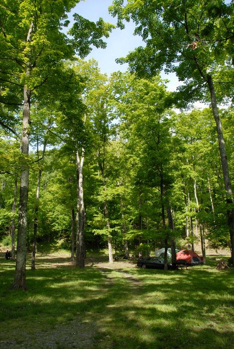 campsites, grass, tent, trees