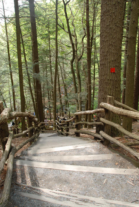 forest, railing, stairs, trees, woods