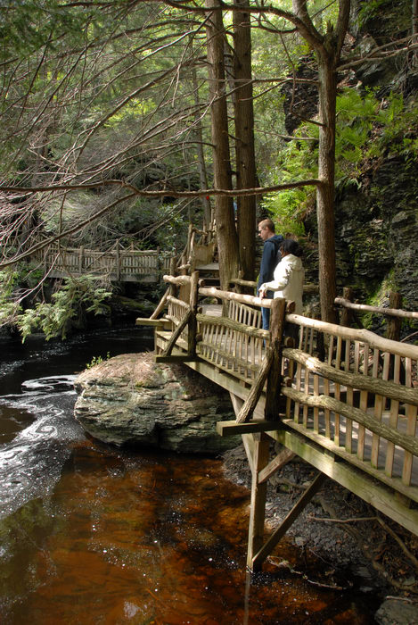 cliff, forest, river, rock, trees, wooden walkway, woods