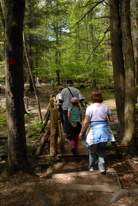 bridge, forest, people, trees, woods