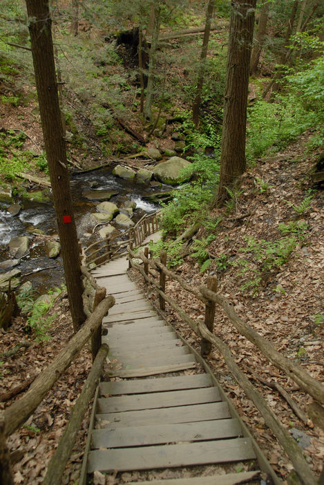 forest, railing, rock, stairs, trees, woods