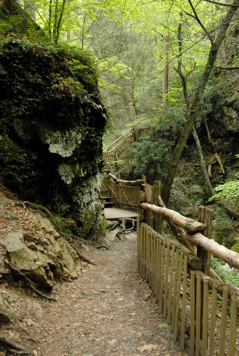 cliff, forest, path, rock, trail, trees, wooden walkway, woods