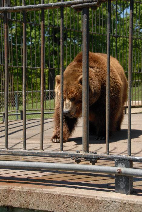 bear, cage