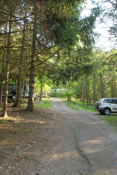 car, road, trees