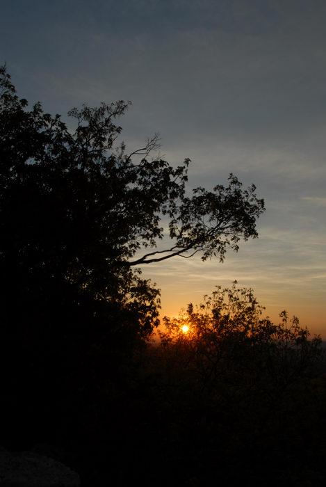 sunrise, trees