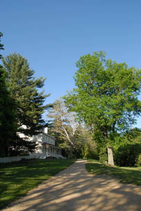 blue sky, dirt, farmhouse, grass, path, tree