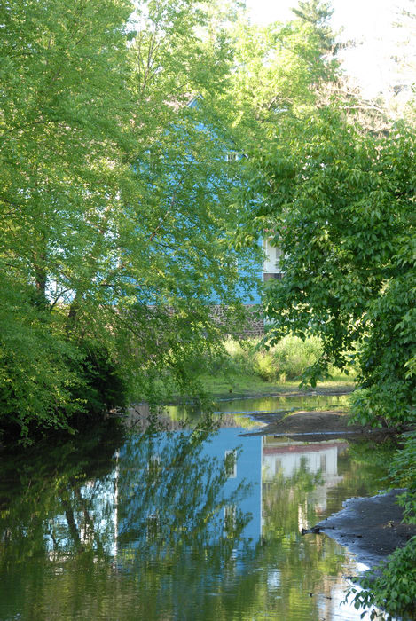 blue, leaves, river, tree, water