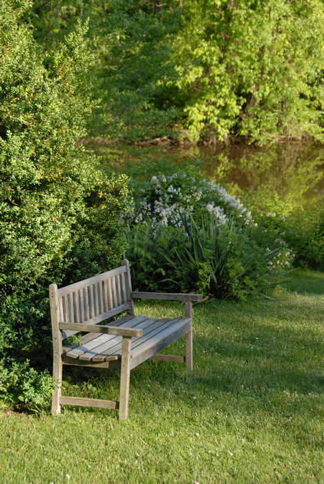 bench, bush, flowers, grass, shrub, water