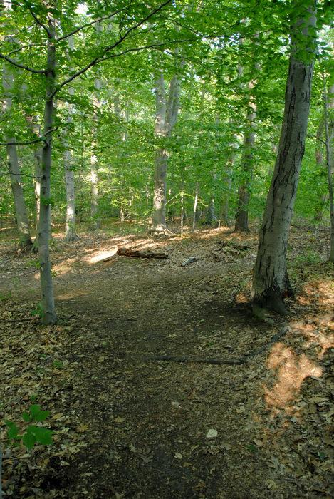 path, tree, woods