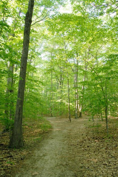 path, trail, tree, woods