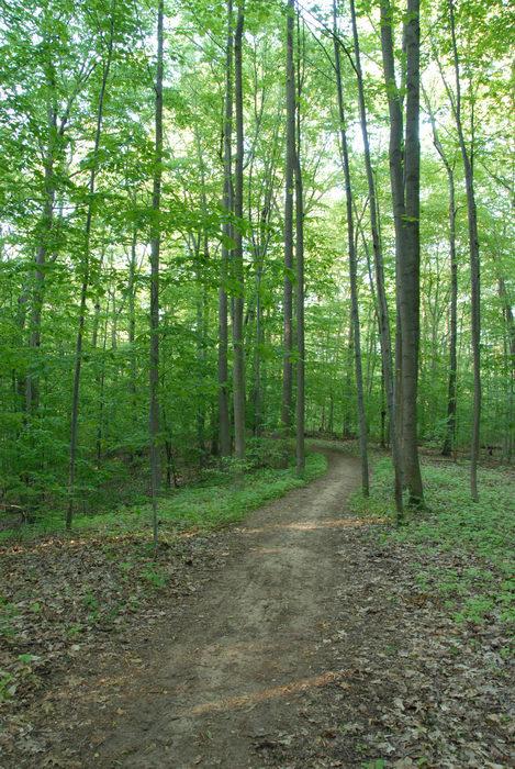 dirt, path, trail, tree, woods