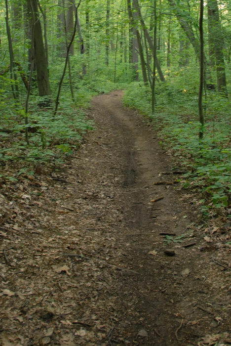 dirt, ground cover, path, trail, tree