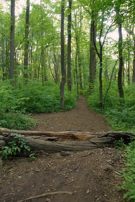 dirt, ground cover, log, path, trail, tree, woods
