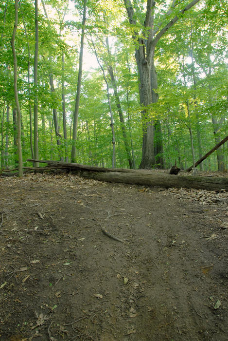 dirt, hill, log, path, trail, tree, woods
