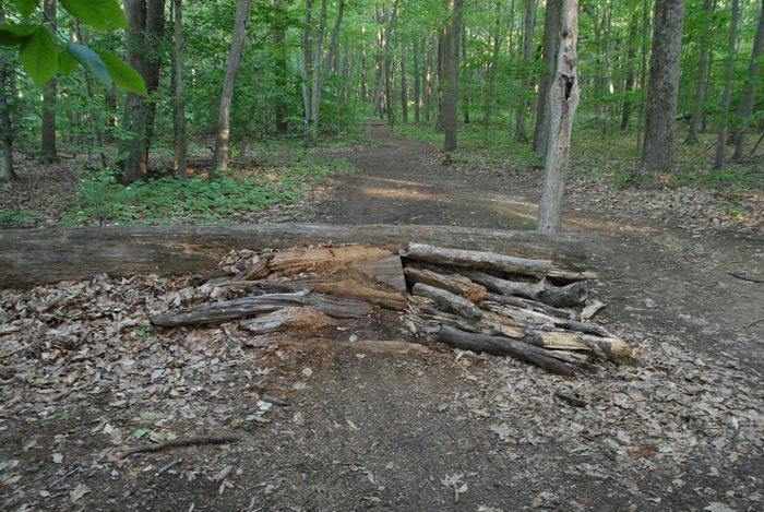 log roll, path, trail, tree, woods