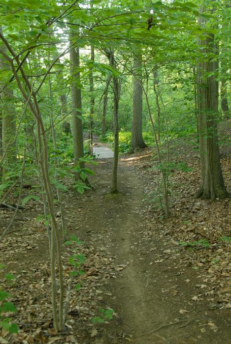 bridge, path, trail, tree, woods
