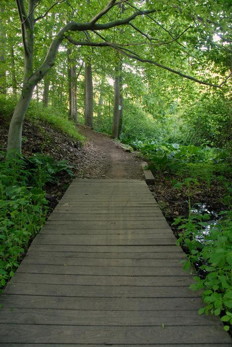 boardwalk, path, sign, trail, tree, woods