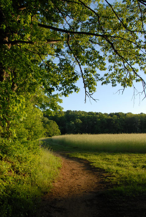 My Favorite Pictures, blue sky, grass, path, sunset, trail, trees