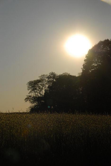 field, sunset, trees