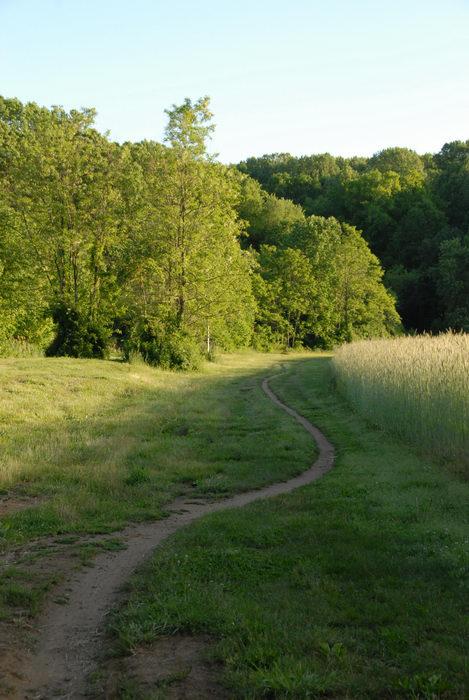 field, grass, path, trail, trees