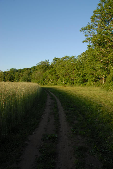 dirt, field, path, trail, trees