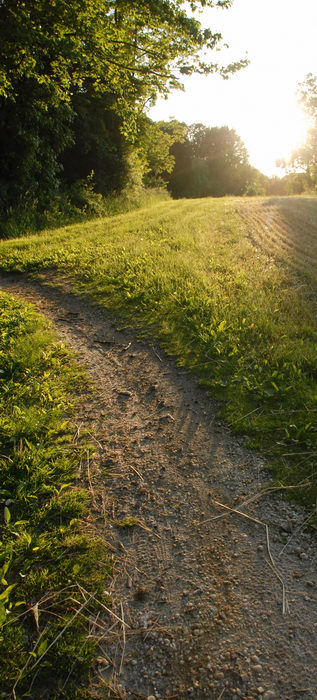 field, grass, path, sunset, trail, trees