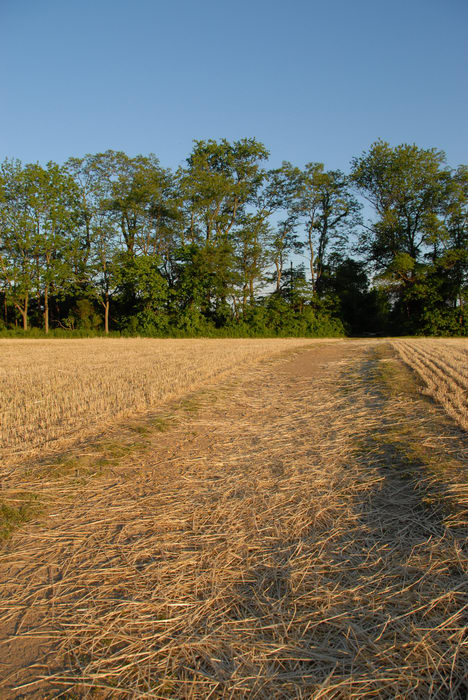 blue sky, field, path, straw, trail, trees