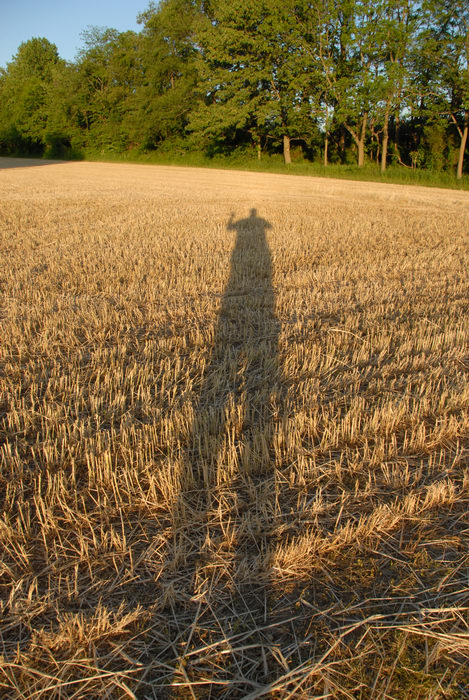 field, shadow, trees