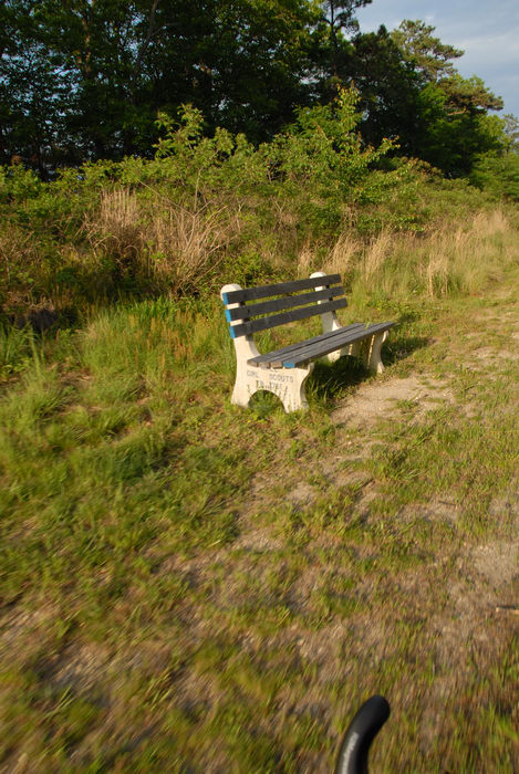 bench, dirt, grass, trees