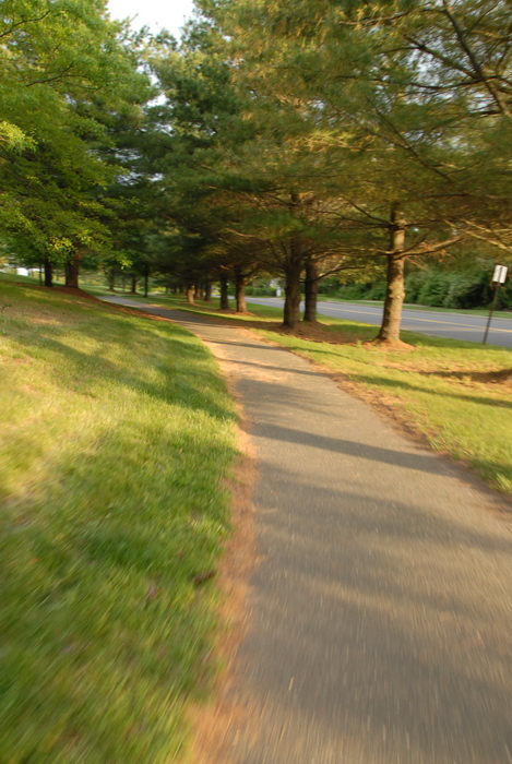 bike path, grass, road, trees
