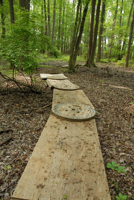 ground cover, path, trees, wooden plank, woods