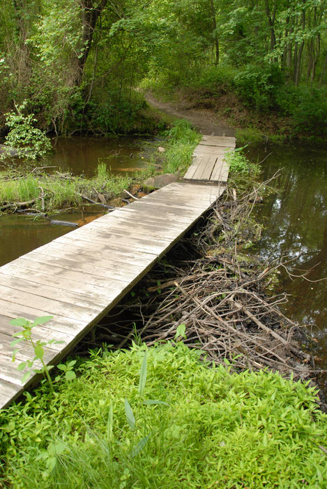 beaver dam, bridge, garbage bridge, grass, path, stream, trail, trees, water, wooden bridge, woods